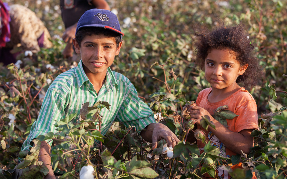 young children working in cotton field