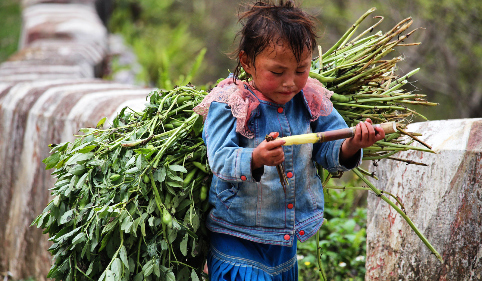 little girl is eating a stick of bamboo while working