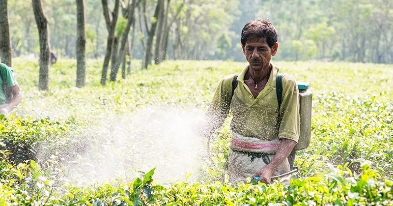 Tea plantation workers like this man are often trapped in a cycle of poverty, earning an average of $1.30 a day.