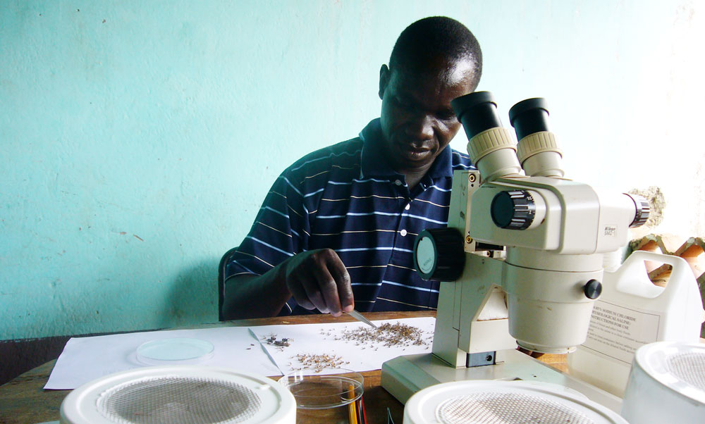 A malaria researcher sorts mosquitoes
