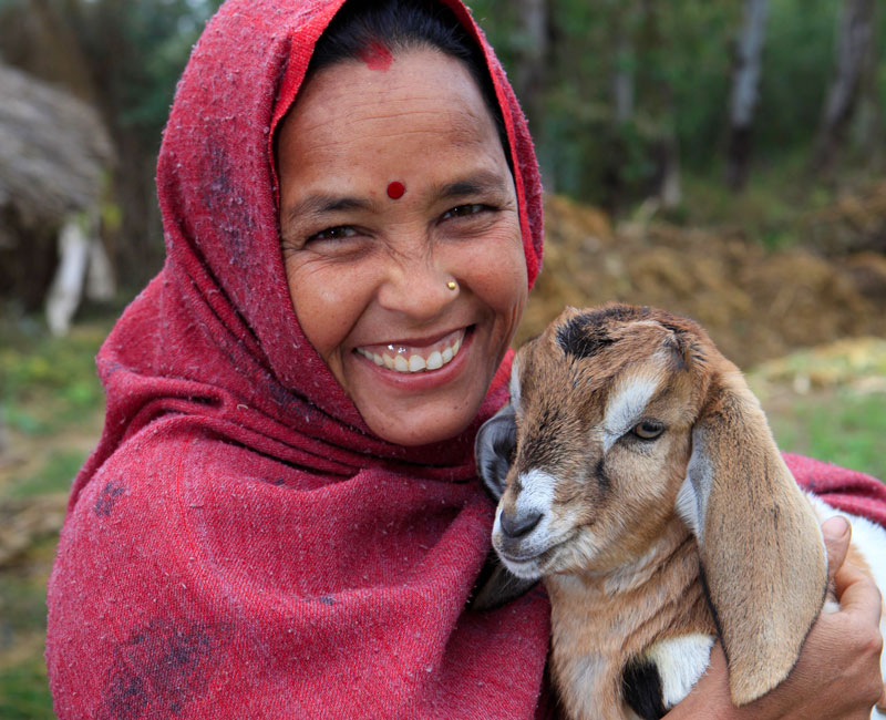 A woman tends to one of her goats at a village in Nepal