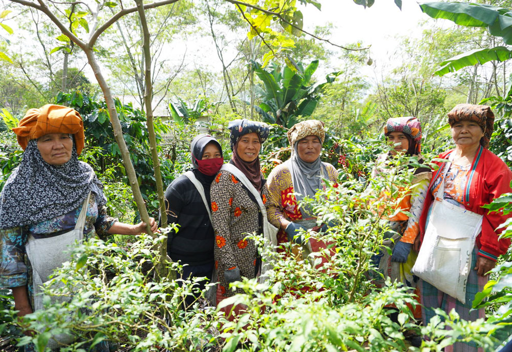 This small-farmers focused co-op grows and processes coffee from a handful of villages.